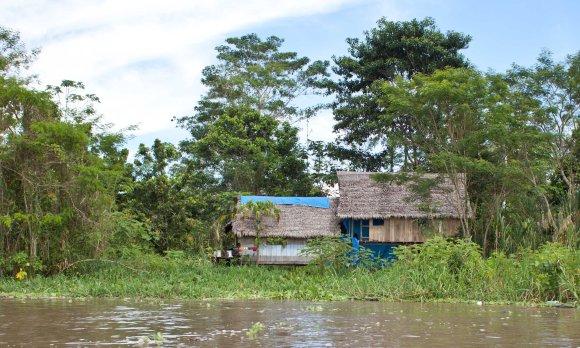 AmazonJunglePeru-178